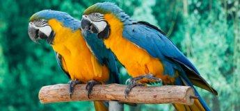 Creek Park Bird Show