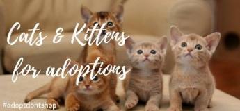 Kittysnip Cats & Kittens Adoption- Dubai