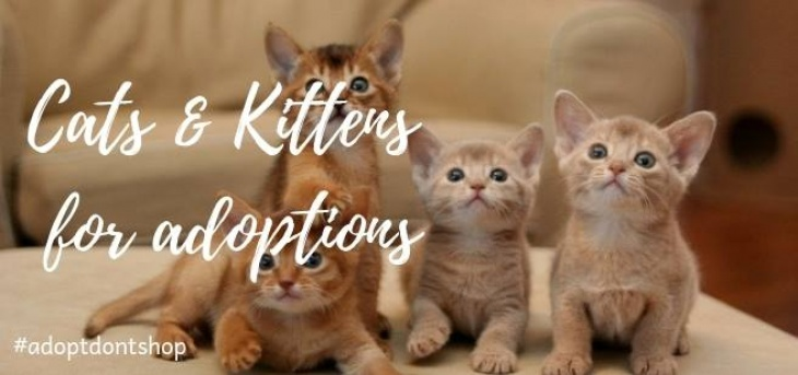 Kittysnip Cats & Kittens Adoption- Dubai