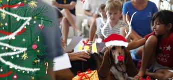 Reading Dogs / Children's Workshop