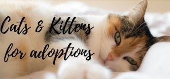 Kittysnip Cats & Kittens Adoption Day