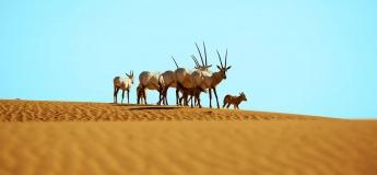 Heritage Falconry, Birds of Prey & Wildlife Desert Safari