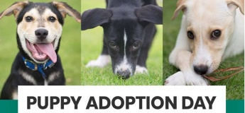 Dogs and Pups Adoption day at Paw Parking